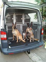 5er Schmidt Hundebox