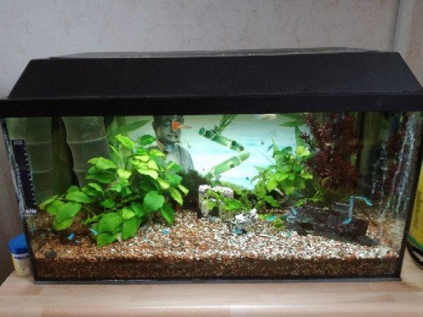 130 aquarium kleinanzeigen kaufen verkaufen bei deinetierwelt. Black Bedroom Furniture Sets. Home Design Ideas