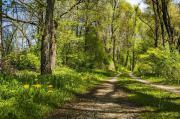 Achtsamkeit und Natur-