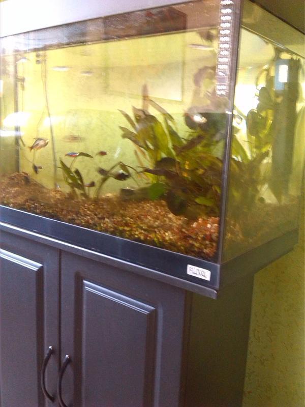 aquaristik in eitting kreis erding bei deinetierwelt. Black Bedroom Furniture Sets. Home Design Ideas