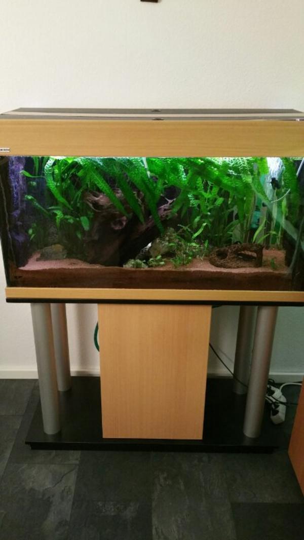 aquarium 200l kleinanzeigen kaufen verkaufen bei deinetierwelt. Black Bedroom Furniture Sets. Home Design Ideas