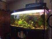 Aquarium 450+ Liter