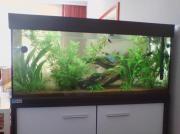 Aquarium Eheim 180