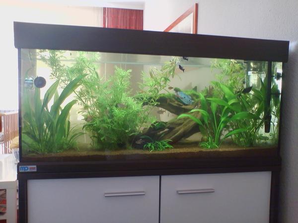 aquaristik in hamburg bei deinetierwelt. Black Bedroom Furniture Sets. Home Design Ideas