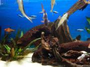 Aquarium EHEIM Vivaline