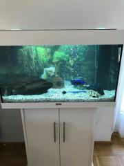 Aquarium inkl. Fische