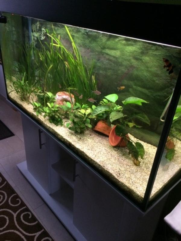 aquarium zubehoer kaufen aquarium zubehoer gebraucht. Black Bedroom Furniture Sets. Home Design Ideas