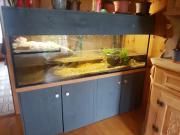 Aquarium mit Schildkröten