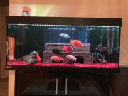 Aquarium von EHEIM
