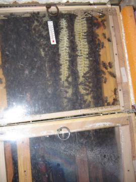 Pflanzen - Bienenbeute 5er System Bienenkasten Bienenweide
