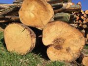 Brennholz, Feuerholz, Stammholz,