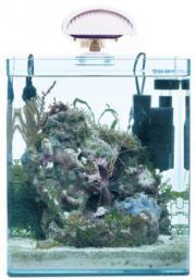 dennerle marinus meerwasser nano aquarium 30l cube riff bio circulator eheim pumpe. Black Bedroom Furniture Sets. Home Design Ideas