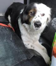 Der hübsche Hundebub Cody