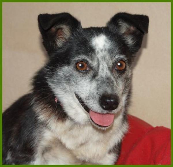 Donina 12 Jahre - Mischling - Tierhilfe