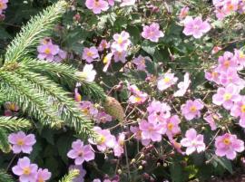 Pflanzen - Eine wunderbare Zierde für jeden