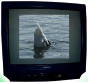 Fernseh klein