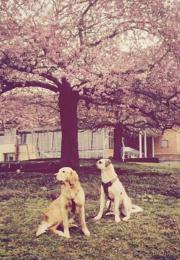 Hundefreunde gesucht