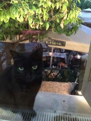 Hundeliebe Katze sucht