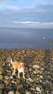 Hundesitting gesucht