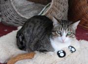 Jessi - zauberhaftes Katzenmädchen