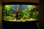 Juwel 260l Aquarium