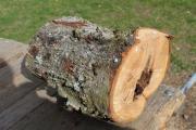 Natürliche Baumhöhle Natur-Stamm-Höhle Tier-Unterschlupf Brutmöglichkeit