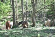 Offenstallplatz aktiv f Pony Isländer