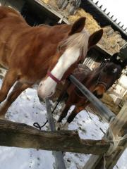 pferde suchen reiter