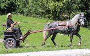 Pony Traum - zum