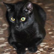 PRETTO - wunderschöner Mini-Panther sucht sein