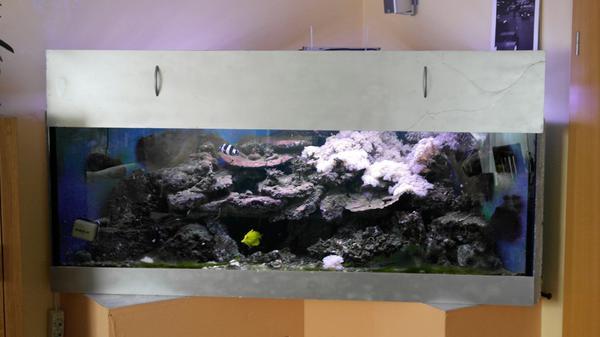 aquarium eckaquarium kleinanzeigen tiermarkt deinetierwelt. Black Bedroom Furniture Sets. Home Design Ideas