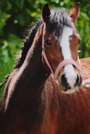 Schickes Pony