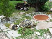 Schildkröten Urlaubsbetreuung Schildikrötenhotel,