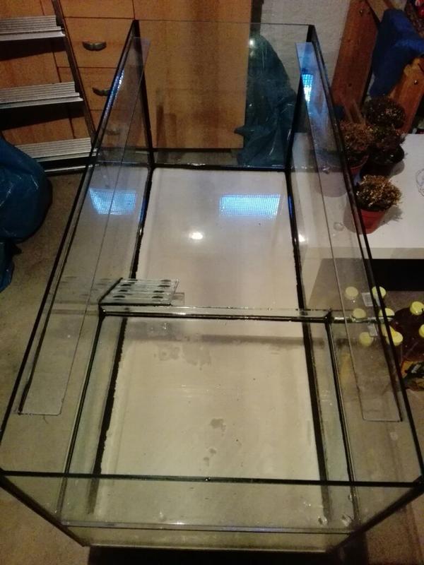 schildkr te kleinanzeigen aquaristik kaufen verkaufen bei deinetierwelt. Black Bedroom Furniture Sets. Home Design Ideas