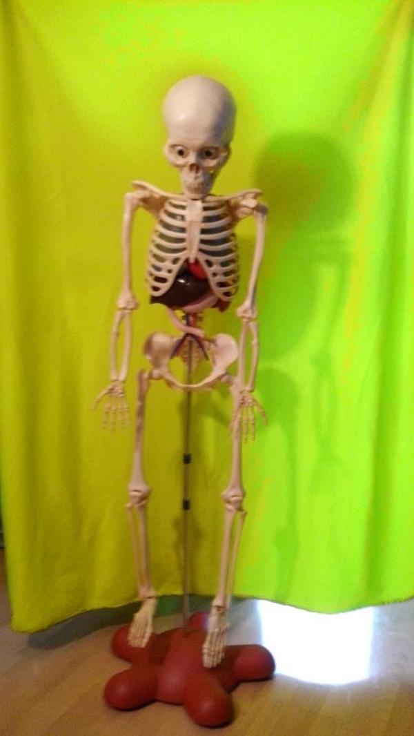Skelett Ferdinand