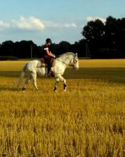 Suche Reitbeteiligung (Pony)
