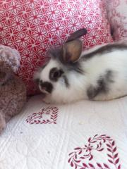Süsses liebes Kaninchenmännchen