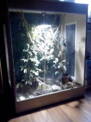 Terrarium für Spinne