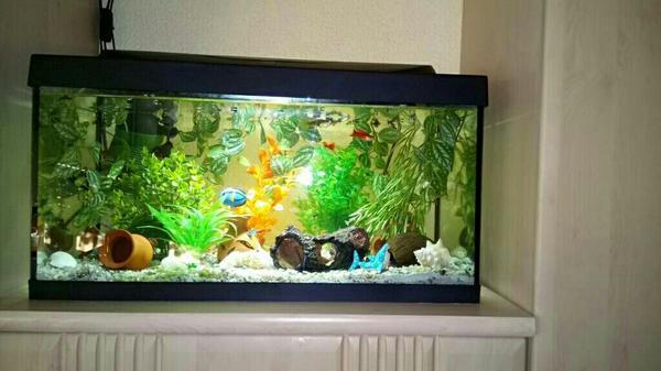guppys fische kleinanzeigen kaufen verkaufen bei deinetierwelt. Black Bedroom Furniture Sets. Home Design Ideas