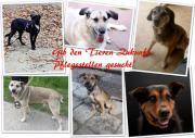 Tierschutzverein sucht Pflegestellen
