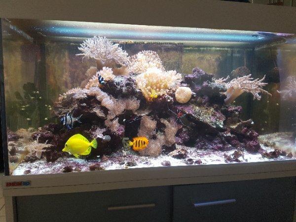 Tiermarkt in neuhausen enzkreis bei deinetierwelt for Salzwasser aquarium fische