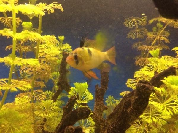 Zu verschenken kleinanzeigen aquaristik deinetierwelt for Kleine zierfische