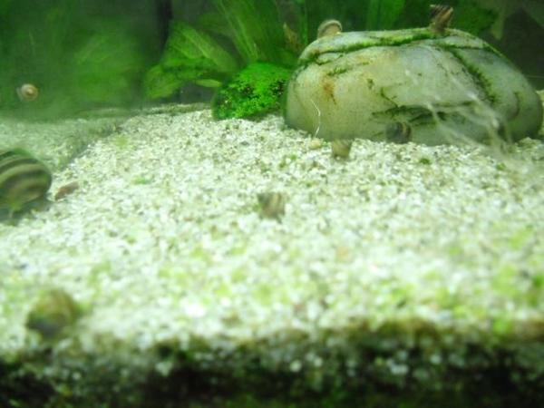 Zierfische kleinanzeigen kaufen verkaufen bei deinetierwelt for Kleine zierfische