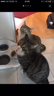 Zwei Katzen zu