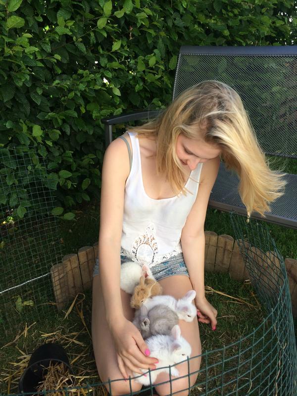 Zwergkaninchen Löwenkopfkaninchen Kaninchen » Kleintiere